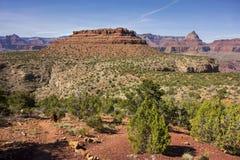 Vishnu Temple och hästsko Mesa Landscape Panorama i den Grand Canyon nationalparken Arizona Arkivbilder