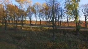Visión aérea cerca de la motocicleta del montar a caballo del hombre joven en la puesta del sol del otoño metrajes