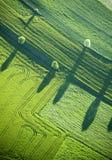 Visión aérea: Cuatro árboles y sombras en un campo Imágenes de archivo libres de regalías
