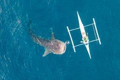 Visión aérea desde el abejón Los pescadores alimentan a tiburones de ballena gigantescos typus del Rhincodon de los barcos en el  imagen de archivo libre de regalías