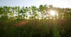 visión aérea 4k Vuelo bajo sobre campo rural del trigo verde y amarillo almacen de video