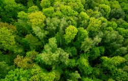Visión aérea o el bosque fotos de archivo