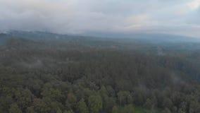 Visión aérea que iguala la niebla y la evaporación sobre la selva y el bosque de Indonesia almacen de video
