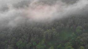 Visión aérea que iguala la niebla y la evaporación sobre la selva y el bosque de Indonesia almacen de metraje de vídeo