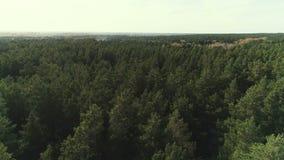 Visión aérea que vuela sobre el bosque hermoso metrajes
