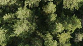 Visión aérea que vuela sobre el bosque hermoso almacen de video
