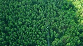 Visión aérea que vuela sobre el camino forestal viejo Seguimiento del coche blanco que se mueve en bosque de pino almacen de video