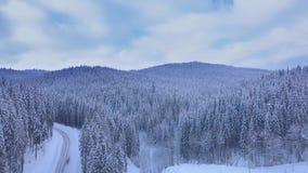 Visión aérea sobre bosque del invierno metrajes