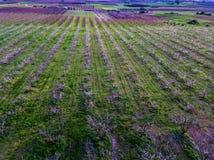 Visión aérea sobre campos agrícolas con los árboles florecientes Fotos de archivo libres de regalías