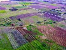 Visión aérea sobre campos agrícolas con los árboles florecientes Fotografía de archivo