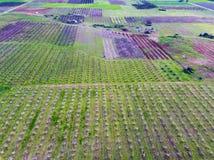 Visión aérea sobre campos agrícolas con los árboles florecientes aéreo Fotografía de archivo