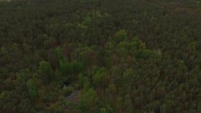 Visión aérea sobre el pequeño lago rodeado por el bosque conífero mezclado almacen de video