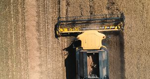 Visión aérea sobre la máquina segadora de trabajo en un campo en la puesta del sol Cosecha de los tractores y de los materiales a metrajes