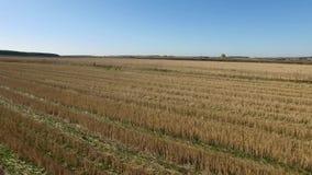 Visión aérea sobre los campos agrícolas cantidad Antena del campo del girasol Plantación de la soja almacen de metraje de vídeo