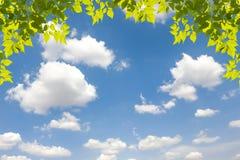 Visión como el cielo y nubes de Bule con las hojas Fotos de archivo