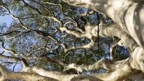 Visión de debajo, fondo abstracto de la naturaleza imagenes de archivo