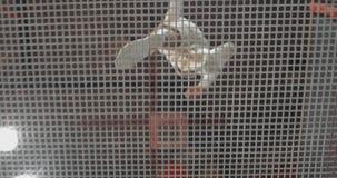 Visión de debajo a través de la malla de los acróbatas del trampolín que saltan en un trampolín Vuelo y tirones almacen de metraje de vídeo