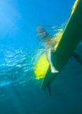 Visión de la persona que practica surf Girl.Underwater. Fotografía de archivo libre de regalías