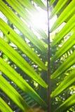Visión del sol a través de una fronda de la palma Imagen de archivo libre de regalías