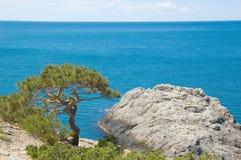 Visión del sur con el mar, la montaña y el pino Fotos de archivo