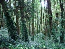 Visión desde él al oeste colinas Portland O Foto de archivo libre de regalías