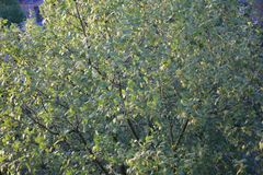 Visión desde arriba de un árbol imágenes de archivo libres de regalías