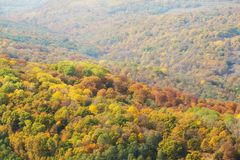 Visión desde arriba del bosque imágenes de archivo libres de regalías