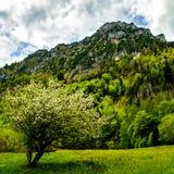 Visión desde el borde de Laudachsee en Gmunden, Austria Imagen de archivo
