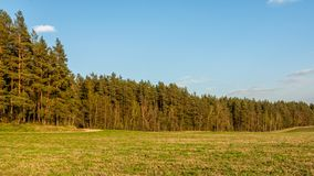 Visión desde el campo al bosque conífero en la luz caliente de la tarde fotografía de archivo