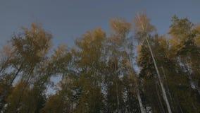 Visión desde el coche móvil de la ventana en el camino de la carretera a través del bosque del otoño almacen de metraje de vídeo