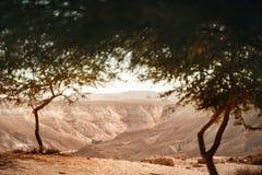 Visión desde el oasis en desierto del Néguev Fotografía de archivo