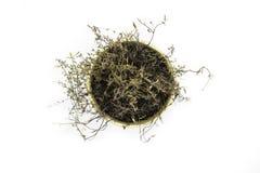 Visión desde el top del arbusto secado del tomillo plantado en un pote de arcilla y aislado del fondo blanco fotos de archivo