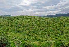 Visión desde el top en la selva tropical Fotos de archivo libres de regalías