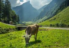 Visión desde en la montaña en Suiza Fotos de archivo libres de regalías