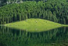 Visión desde en la montaña en Suiza Imagenes de archivo