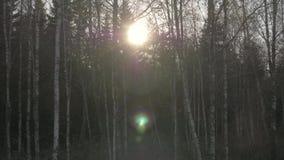 Visión desde la luz del sol del coche a través del bosque del otoño en el camino suburbano en día soleado almacen de video