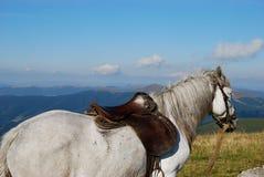 Visión desde la parte posterior del caballo Imágenes de archivo libres de regalías