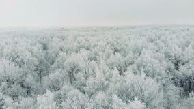 Visión desde la tapa Pino y abetos congelados aéreos en la nieve en invierno metrajes