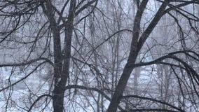 Visión desde la ventana almacen de video