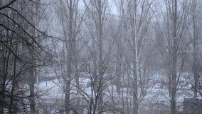 Visión desde la ventana almacen de metraje de vídeo