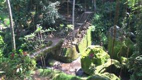 Visión en el jardín verde en el templo de la cueva del elefante de Goa Gajah cerca de Ubud, Bali, Indonesia, vídeo de la cantidad almacen de video
