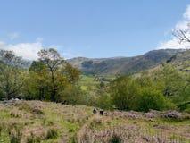 Visión en el valle a través de árboles Foto de archivo libre de regalías
