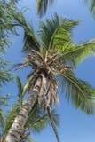 Visión en la palmera en la isla de Mussulo, Luanda, Angola imagen de archivo