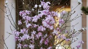 Visión en las flores rosadas en onda apacible del árbol del viento, edificio moderno Naturaleza almacen de video