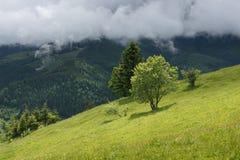 Visión en los árboles con la colina de la montaña cubierta con el bosque en verano Imagen de archivo