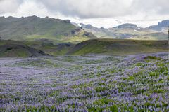 Visión en los llanos islandeses durante verano Foto de archivo