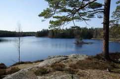 Visión en un lago del bosque Imágenes de archivo libres de regalías