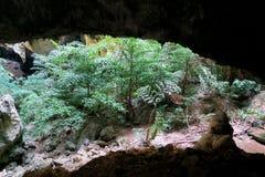 Visión en una cueva en el parque nacional de Khao Sam Roi Yot Fotos de archivo libres de regalías