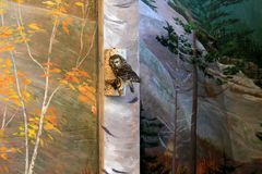 Visión escénica con el búho relleno en la rama, centro del ` s del visitante, Mt Washington, New Hampshire, 2016 Fotografía de archivo libre de regalías