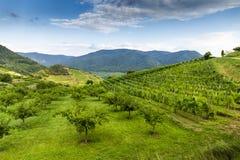 Visión escénica en el Wachau con el río Danubio spitz imagen de archivo libre de regalías
